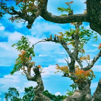 Bộ sưu tập hình nền về vẻ đẹp huyền bí của thiên nhiên thế giới