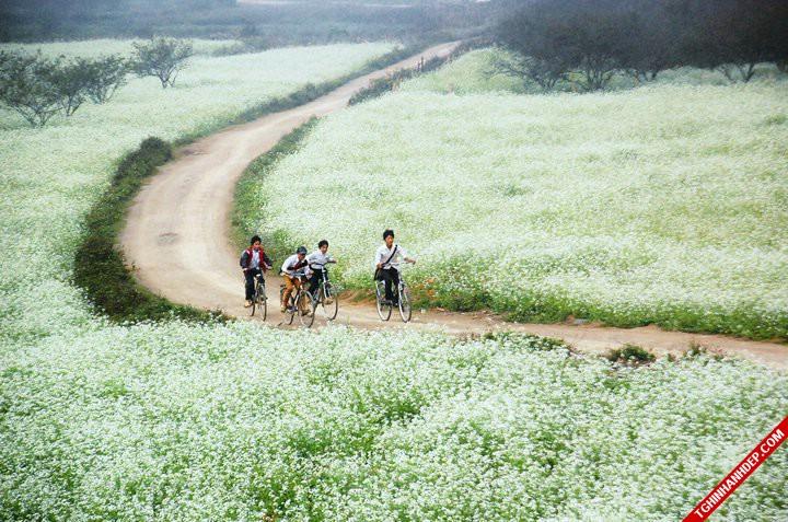 Những địa điểm đẹp đầy lãng mạn để đi du lịch hay chụp ảnh cưới ở Mộc Châu