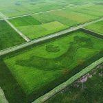 Hình ảnh những cánh đồng lúa tuyệt đẹp của Việt Nam từ góc nhìn trên cao