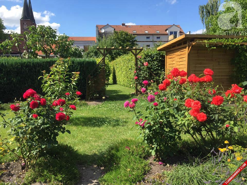 Hình ảnh ngôi nhà được bao phủ bởi vườn cây và hoa trông vô cùng mát mẻ và ấn tượng