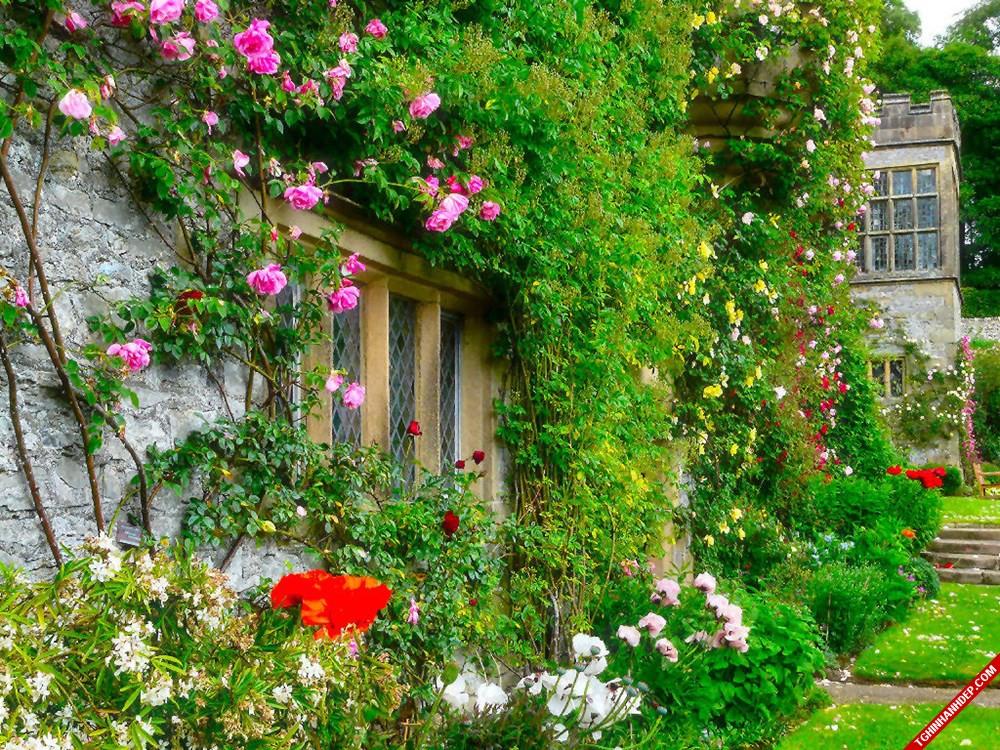 Mẫu nhà vườn đẹp với những loại hoa leo phủ kín ngôi nhà, tạo điểm nhấn nổi bật