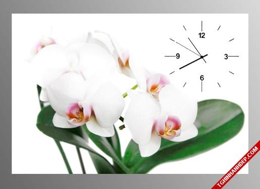 Mẫu tranh đông hồ hình hoa lan