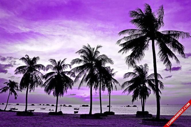 Hình ảnh đẹp của bãi biển hoàng hôn tím