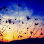 Trải nghiệm hình ảnh phong cảnh thiên nhiên hoàng hôn tím