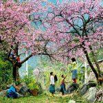 Cảnh đẹp hoang sơ nhưng đầy lãng mạn của Mộc Châu vào mùa đào nở